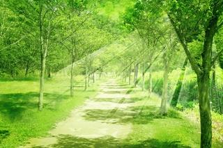 緑の並木道と光.jpg