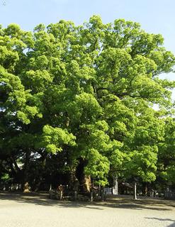 楠木.jpg